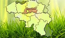Brabant Flamand